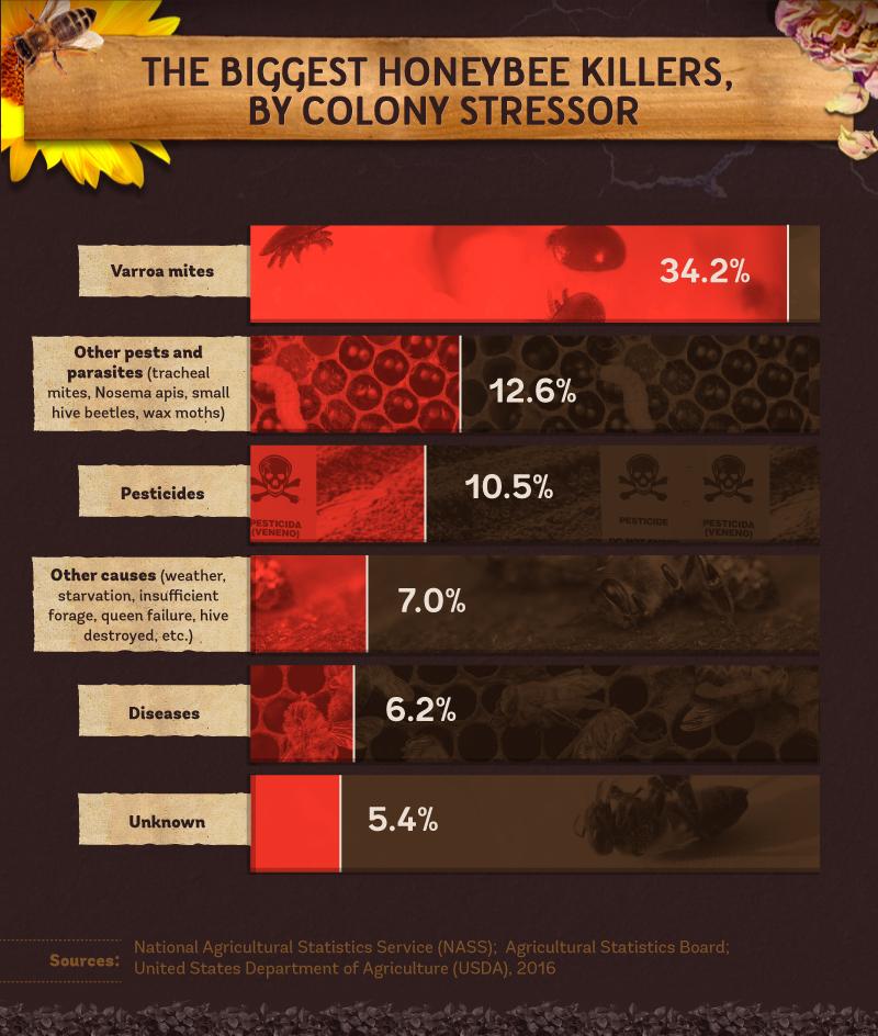 honey bee population decline causes