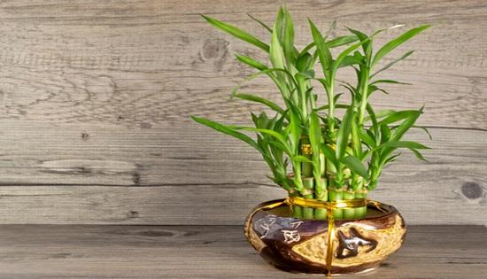 091514_shutterstock_143196808_bamboo_OS