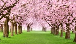 10 Energy-Saving Tips for Spring