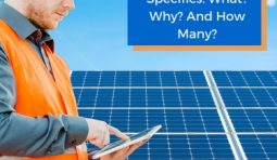 Solar Panel Specifics: What? Why? And How Many?