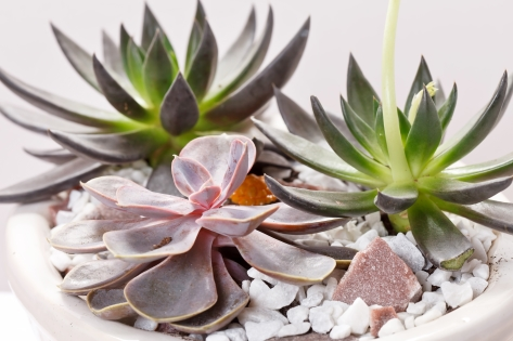 Sustain a Healthy Home with an Indoor Garden