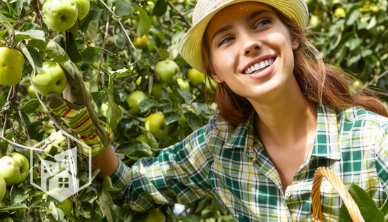 Five Sustainable Apple-Picking Destinations for Fall