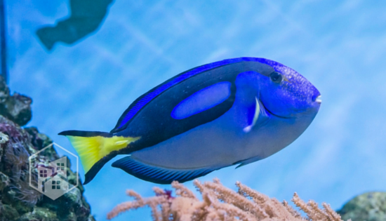 Finding Dory Movie Encourages Ocean Conservation