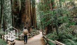 Wander the Woodlands: Visit Our Forest Destination Picks for 2017