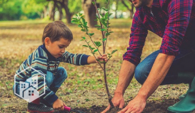 Learn How to Care For Trees in Honor of Arbor Day