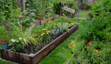 4 Reasons to Try Foodscaping Your Lawn