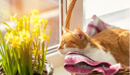 8 tips for saving energy this spring