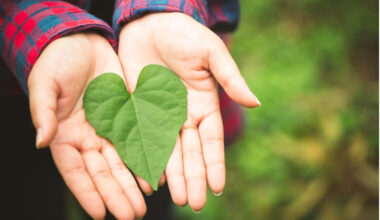 Common myths about going green
